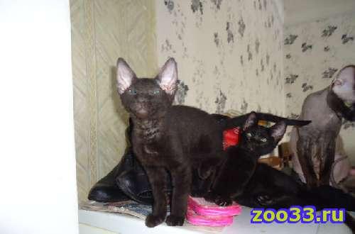 Продаю котят - Фото 1