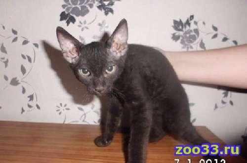 Продаются котята - Фото 1