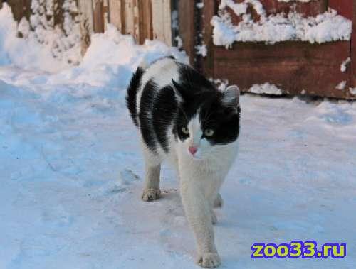 найдне черно-белый кот на ул. 850-летия - Фото 1