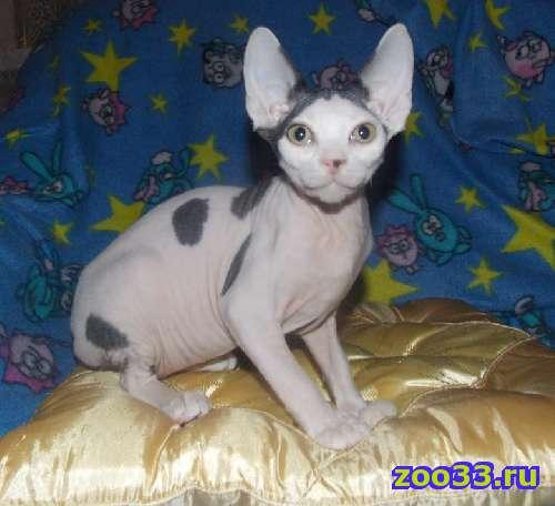 забавные котята - Фото 1