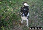 .... помогите найти собаку лайку !!!обещаю солидное вознагрождение!!!!!!!!! была привязана возле магазина ,, все в розочках,, на верхней .. .