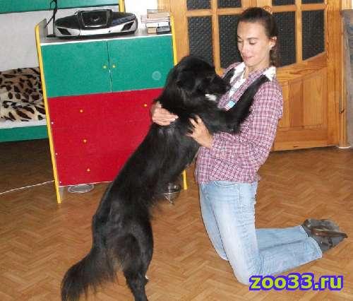 Собака бордер колли - Фото 1