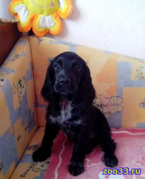 продаю собаку - Фото 1