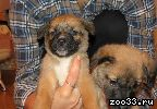 Отдадим щенков в хорошие руки (мальчик и девочка). Хорошо едят, смышленые, игривые. У себя оставить нет возможности, так как у самих две собаки.