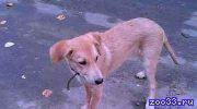 В хорошие и ответственные руки отдаем щеночка!!! Ищет дом и хозяина малышка по имени Солнышка. Щенок-девочка, 4,5 месяца. Идеальный.. .