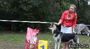 Предлагаем вашему вниманию уникальный помёт Восточноевропейской овчарки! В нашем помёте собраны крови лучших собак России! Дед этих...