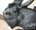 продаю кролика 2,5 кг