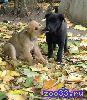 Милые, добрые, игривые щенята сослужат вам верную службу. С вопросами обращаться по телефону : 89206220624 Алла Сергеевна. P. S. ...