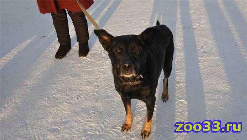 Хорошая собака ищет дом - Фото 1