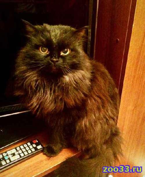Красивый молодой котик в добрый дом - Фото 1