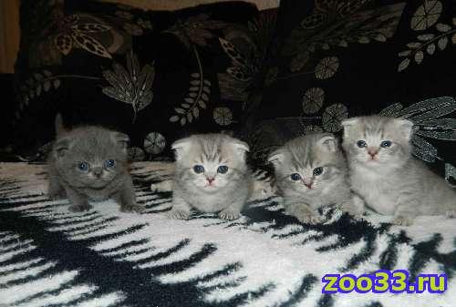 котята - Фото 1