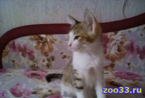 Кошечка - Фото 1
