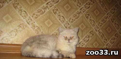 Отдам кота Экзота - Фото 1