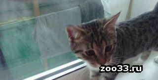 Отдам в добрые руки котенка - Фото 1
