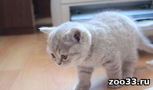 котенок сахарная вата - Фото 1