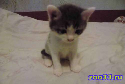 Подарю котят - Фото 1