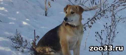 Молодая стерилизованная собака 6 месцев - Фото 1