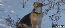 Молодая стерилизованная собака 6 месцев