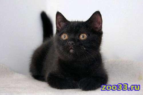 Черные котята - Фото 1