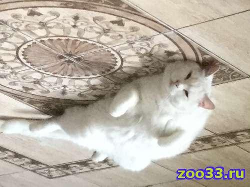 Пропала белая очень крупная кошка - Фото 1