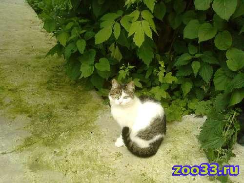 Пропала кошка - Фото 1