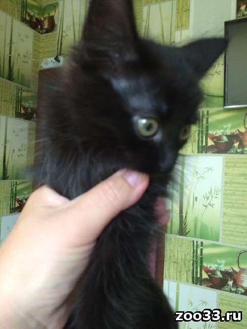 Котенок черный в добрые руки!!! - Фото 1