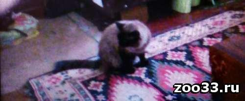 Поиск кота - Фото 1