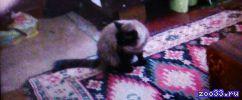 Поиск кота