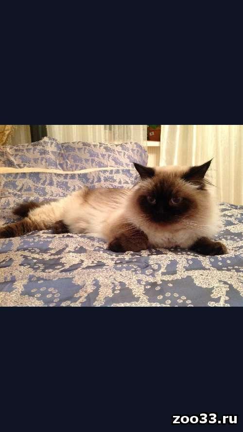 Потерялся кот 8лет - Фото 1