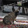 Пропала собака, девочка 3 года Микр Юрьевец