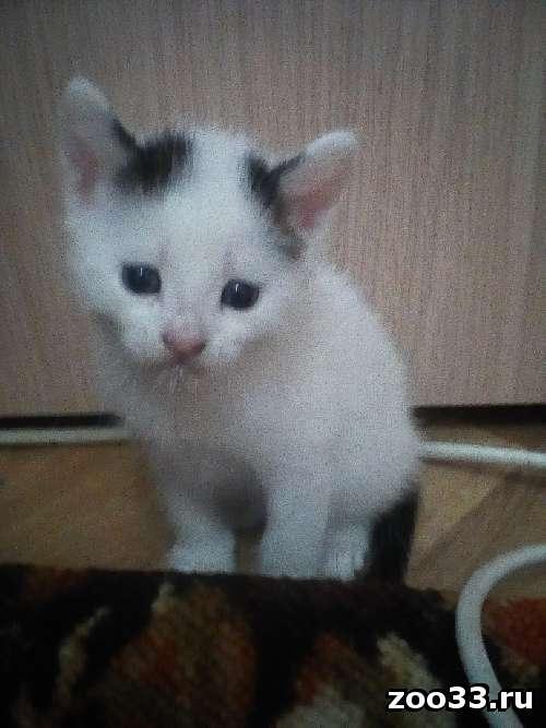 Отдам котят в добрые руки - Фото 1