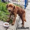 Найдена собака 09.11.19. Сидит у ворот. Ждёт и ищет хозяина.